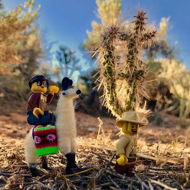 Don't try riding a llama. . When you're in the desert, do travel in the heat of the day. Once the sun comes up, hunker down in the shade so your llama can rest up. .. . #discoveringthemuch #exploringtheglobe #folkscenery #followmeto #getaway #igtravel #ilovetravel #instapassport #mytinyatlas #passionpassport #planetdiscovery #postcardsfromtheworld #realfolklife #roamtheplanet #theglobewanderer #travel #travelblogging #traveldeeper #traveler #travellove #travelpic #travelwriter #wanderer #worldtravel #lego #desert #llama #hikingadventures #optoutside #legos