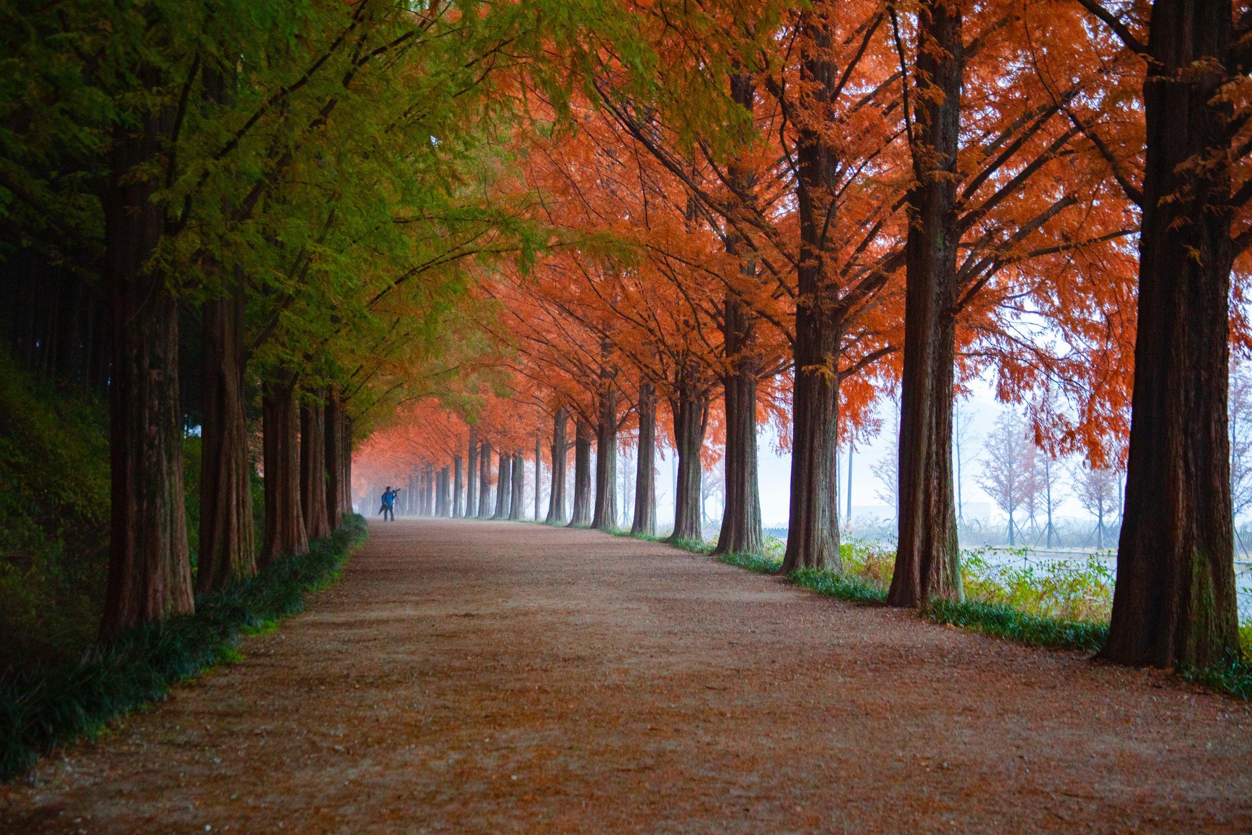 4k-wallpaper-autumn-branches-2734421.jpg