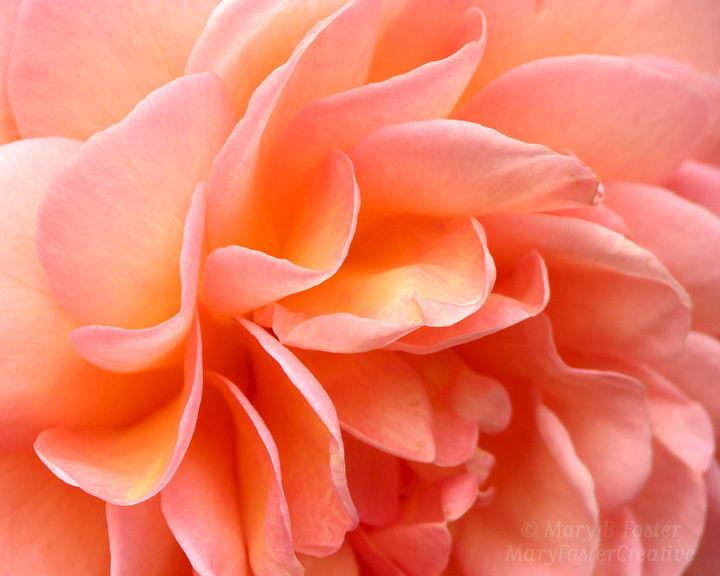 HV pink.jpg