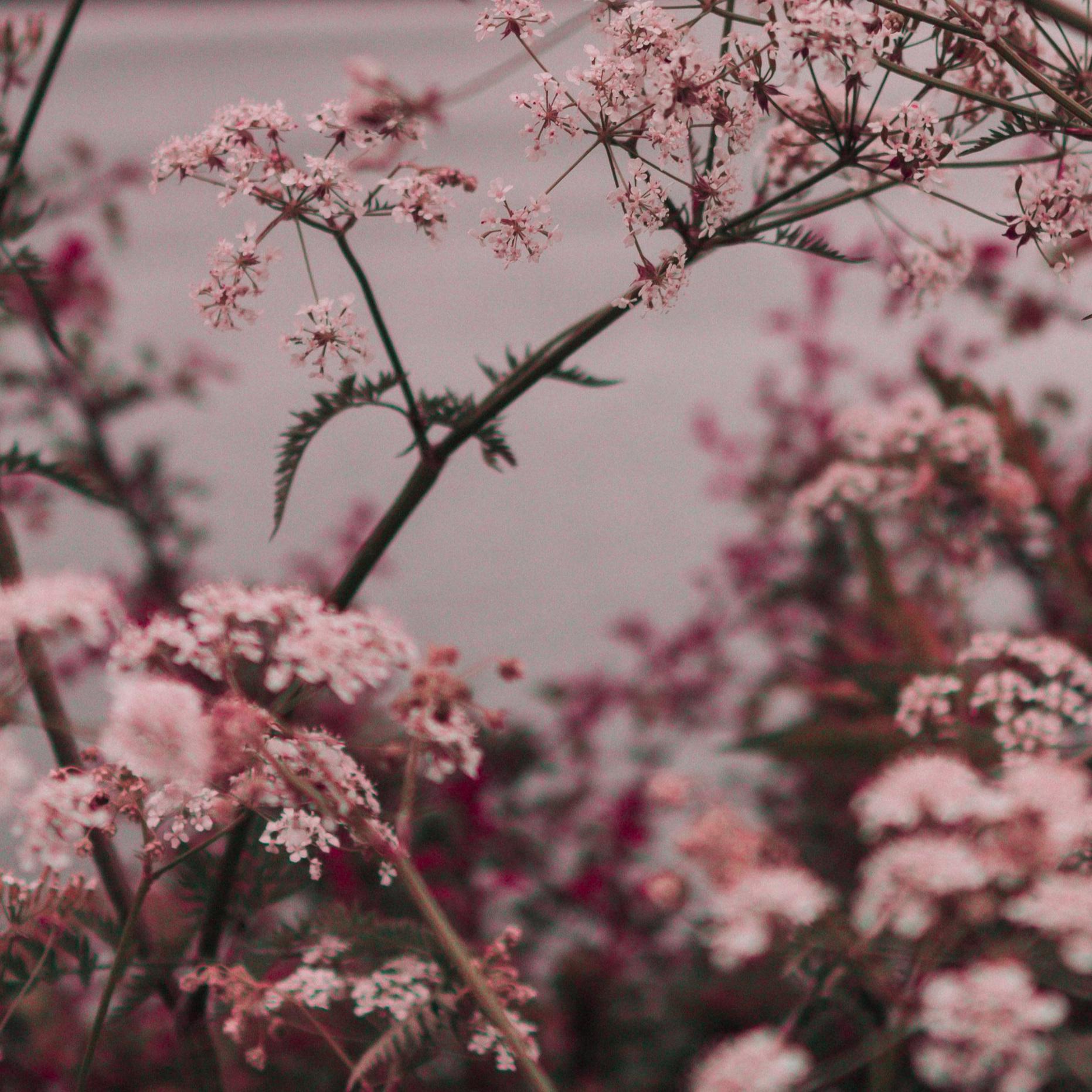 Soft Summer -