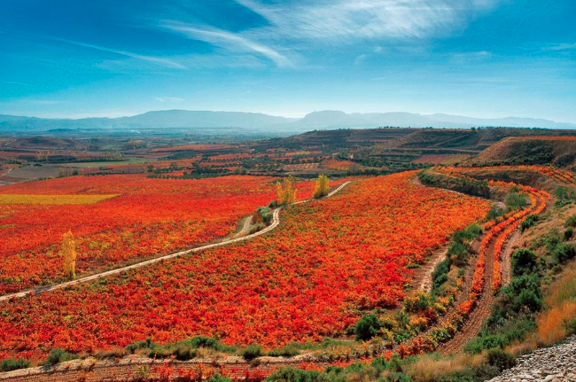 Spanish Wine Road Trip - FORBES