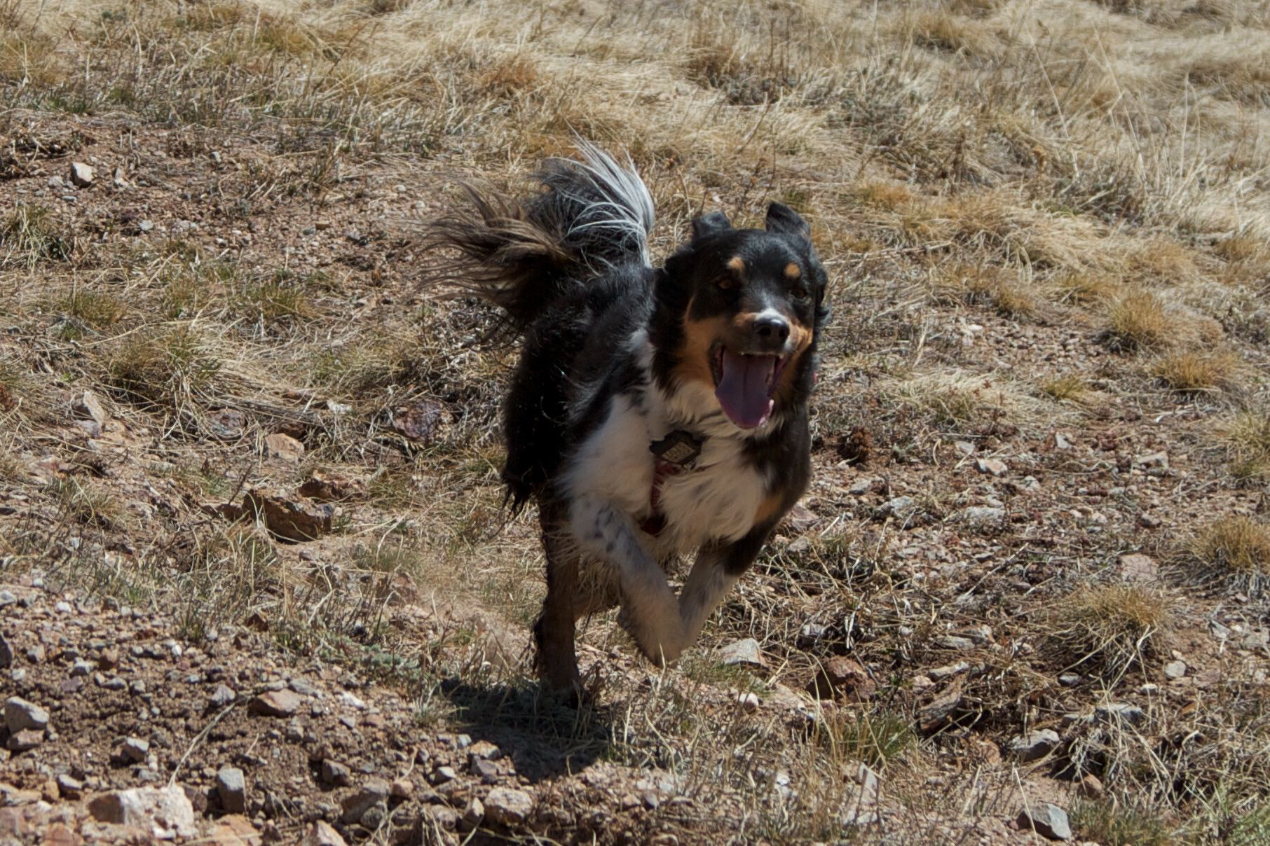 Tia-running-tongue.jpg