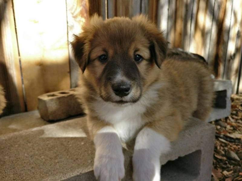 Brodie-puppy.jpg