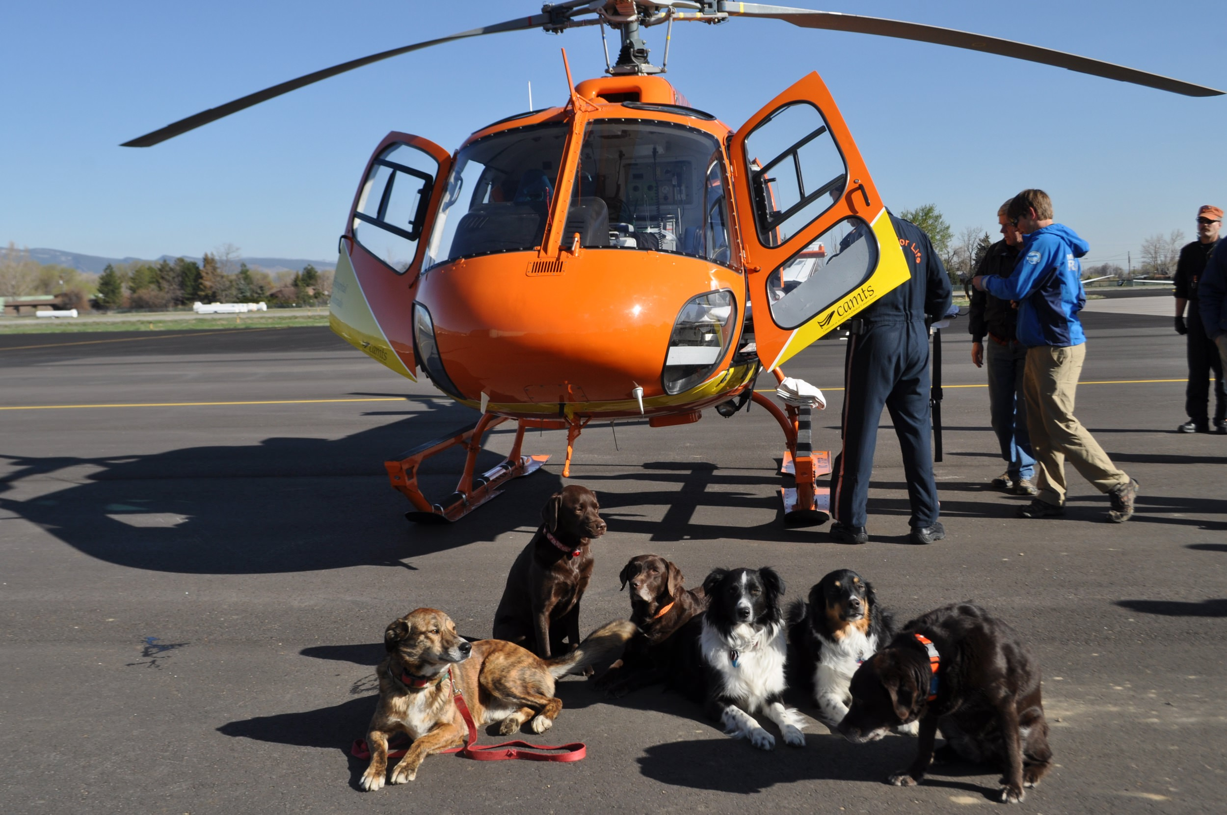 Dogs-with-heli.JPG