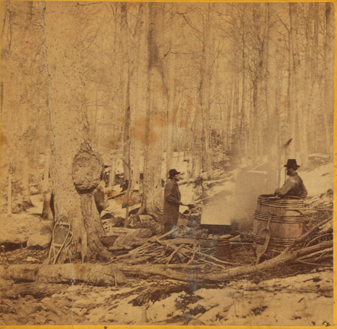 Boiling down the sap from a sugar maple, ca. 1905.