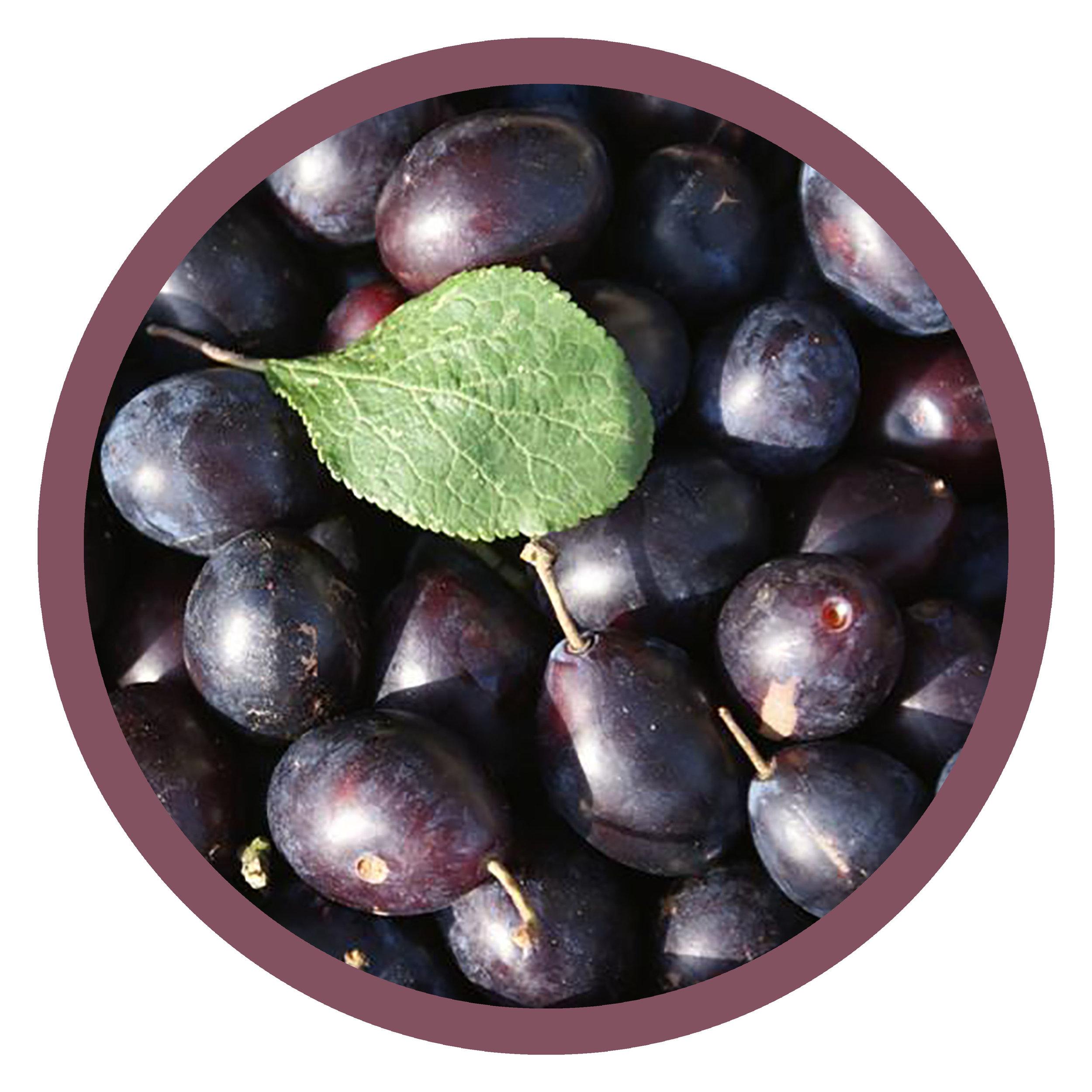 plums round.jpg