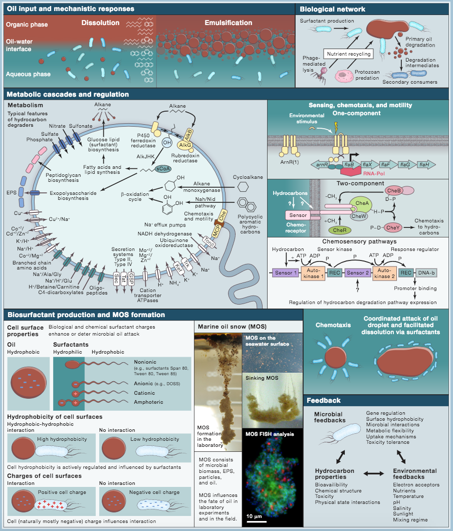 microbiome map from 2018 Cell paper.jpg