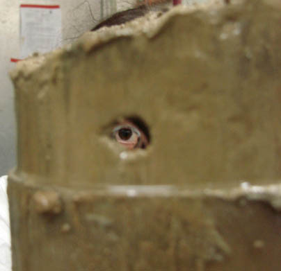 Looking through the hole created by a burrow in far field control sediments (credit: Melitza Crespo)