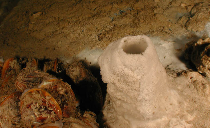 Barite chimney (white) at a mud volcano