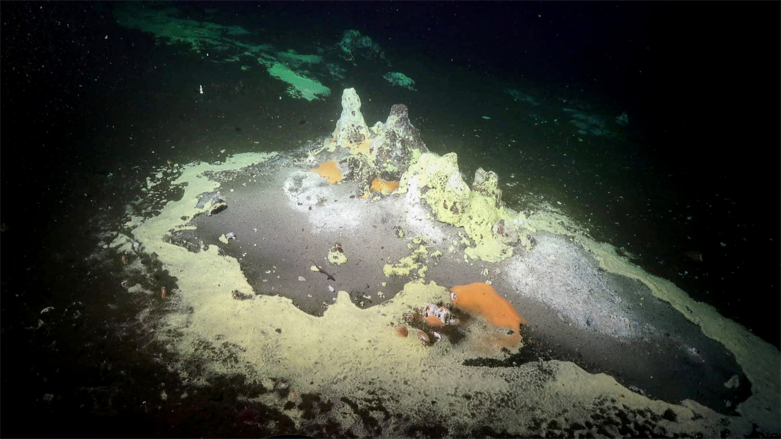 Bacterial mats and hydrothermal chimneys in the Gulf of California.  (Image courtesy of Schmidt Ocean Institute)