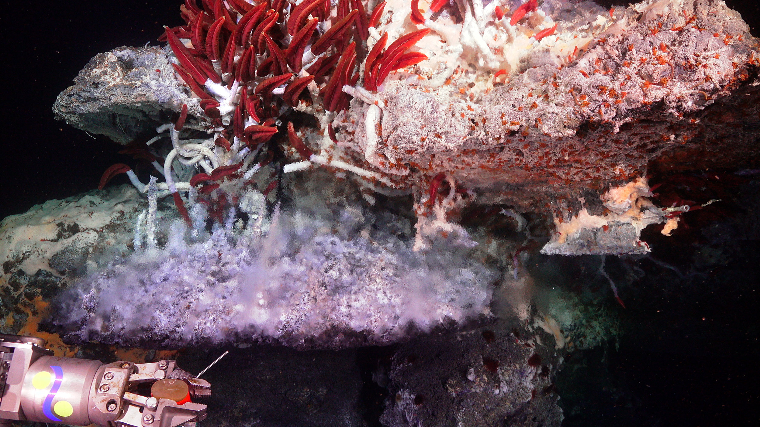 Hydrothermal vent structure in the Gulf of California.  (Image courtesy of Schmidt Ocean Institute)