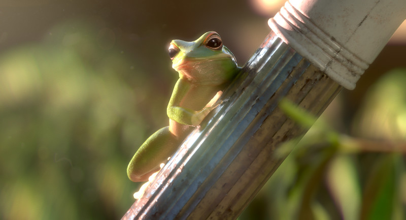 garden party - In a deserted rich house, a couple of amphibians explore their surroundings and follow their primal instinct.