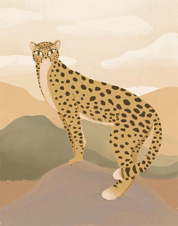Cheetah.jpg