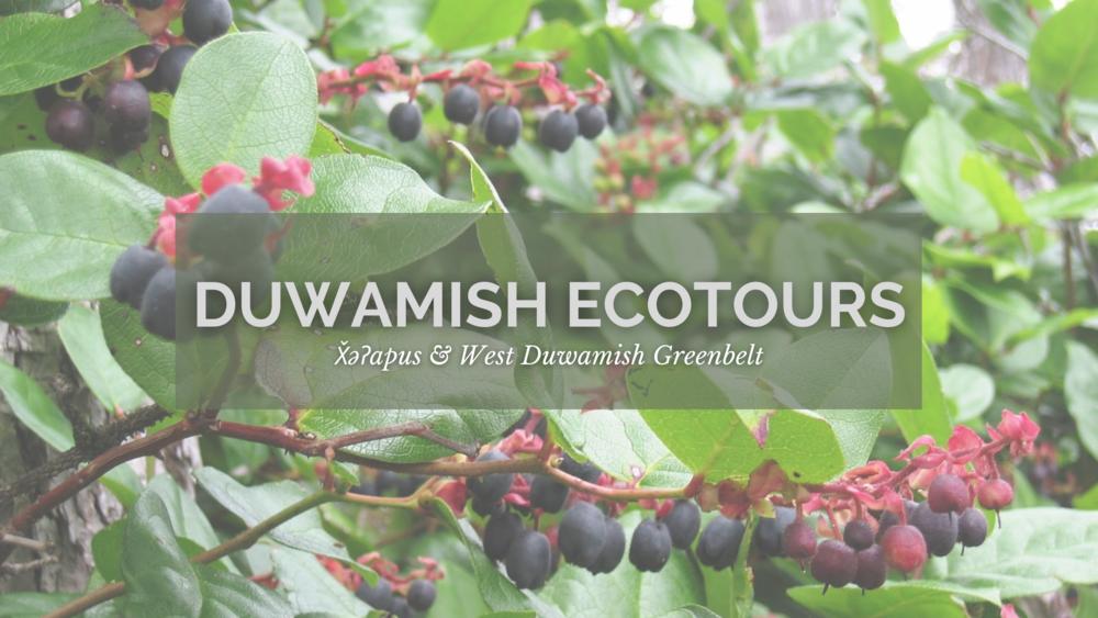 ecotours website banner.png