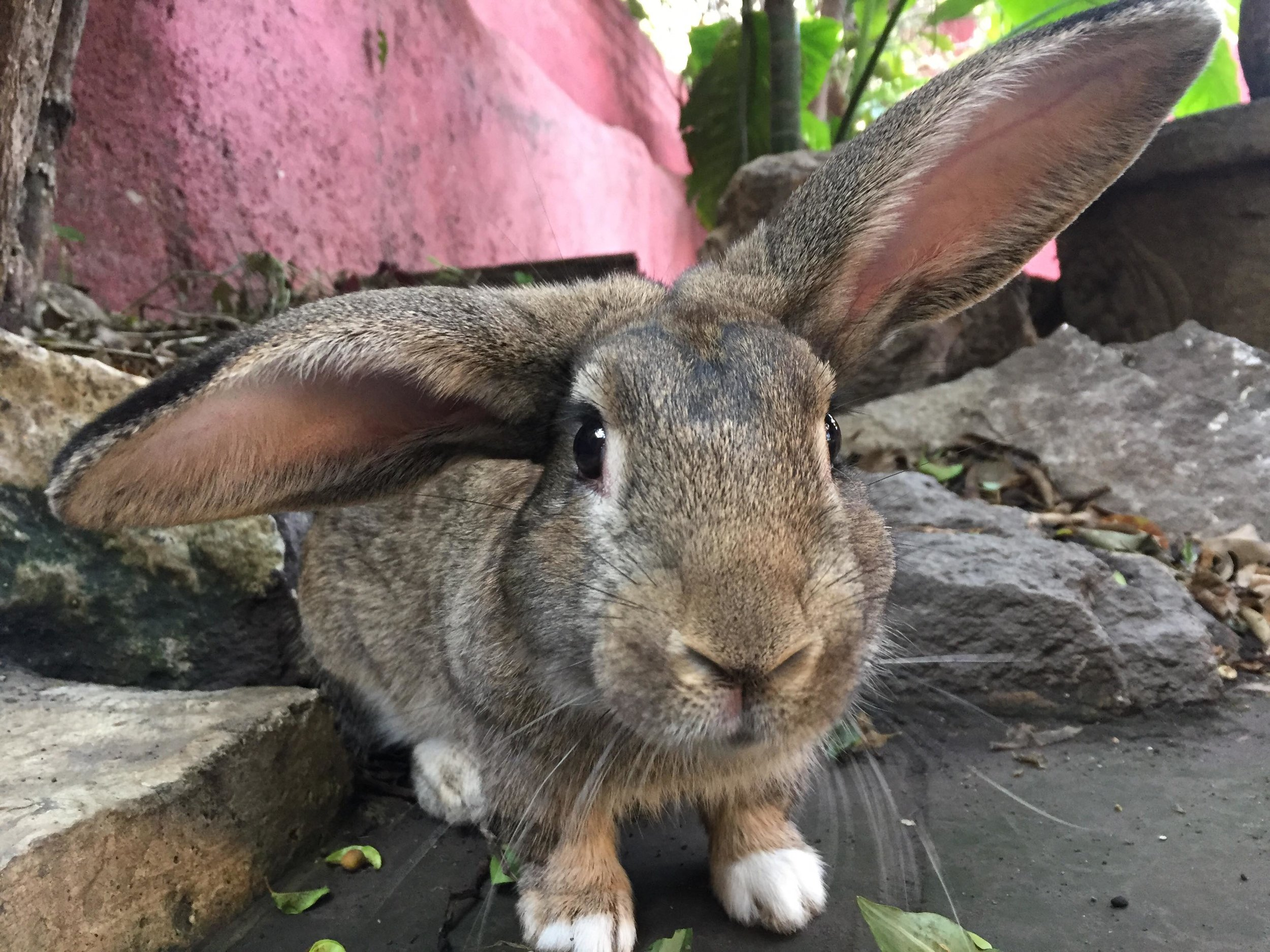 Furry Friends -  It's important that you like animals as we have pet cats and a bunny rabbit; the animals roam free around our property and are very friendly. If you have allergies you should be fine as our pets are not allowed inside the guest rooms.