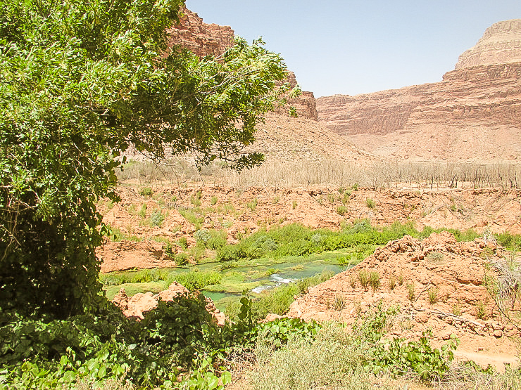 Lush area outside of Supai