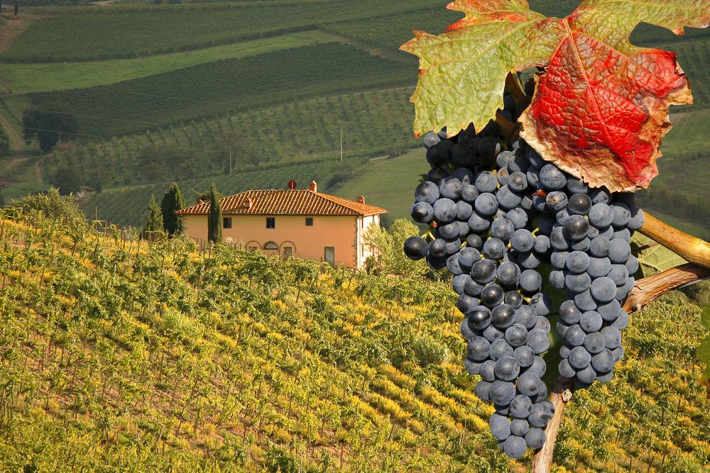 Vineyeard-in-Chianti-Tuscany-Italy-famous-landscape.jpg