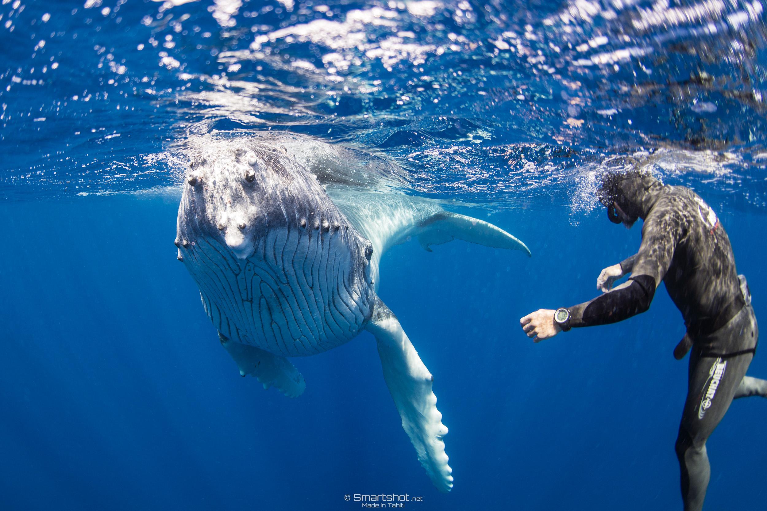 150905_Whales-UW_Smartshot_063.jpg
