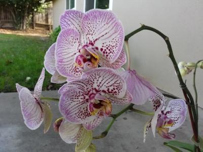 fairoaks-orchids-12-2016.jpg
