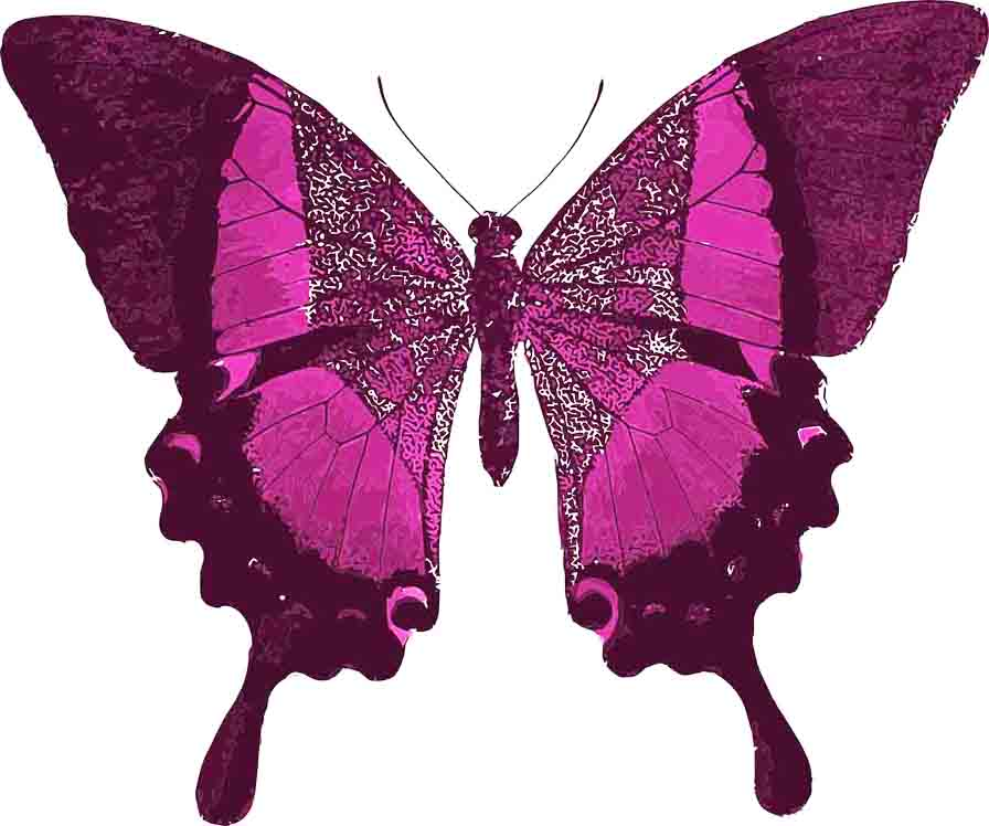 The thyroid is shaped like a butterfly. After years of exhaustion, it wasn't until I was diagnosed with Hashimoto's disease that I found my way to Keto and a healthier, more energetic life.