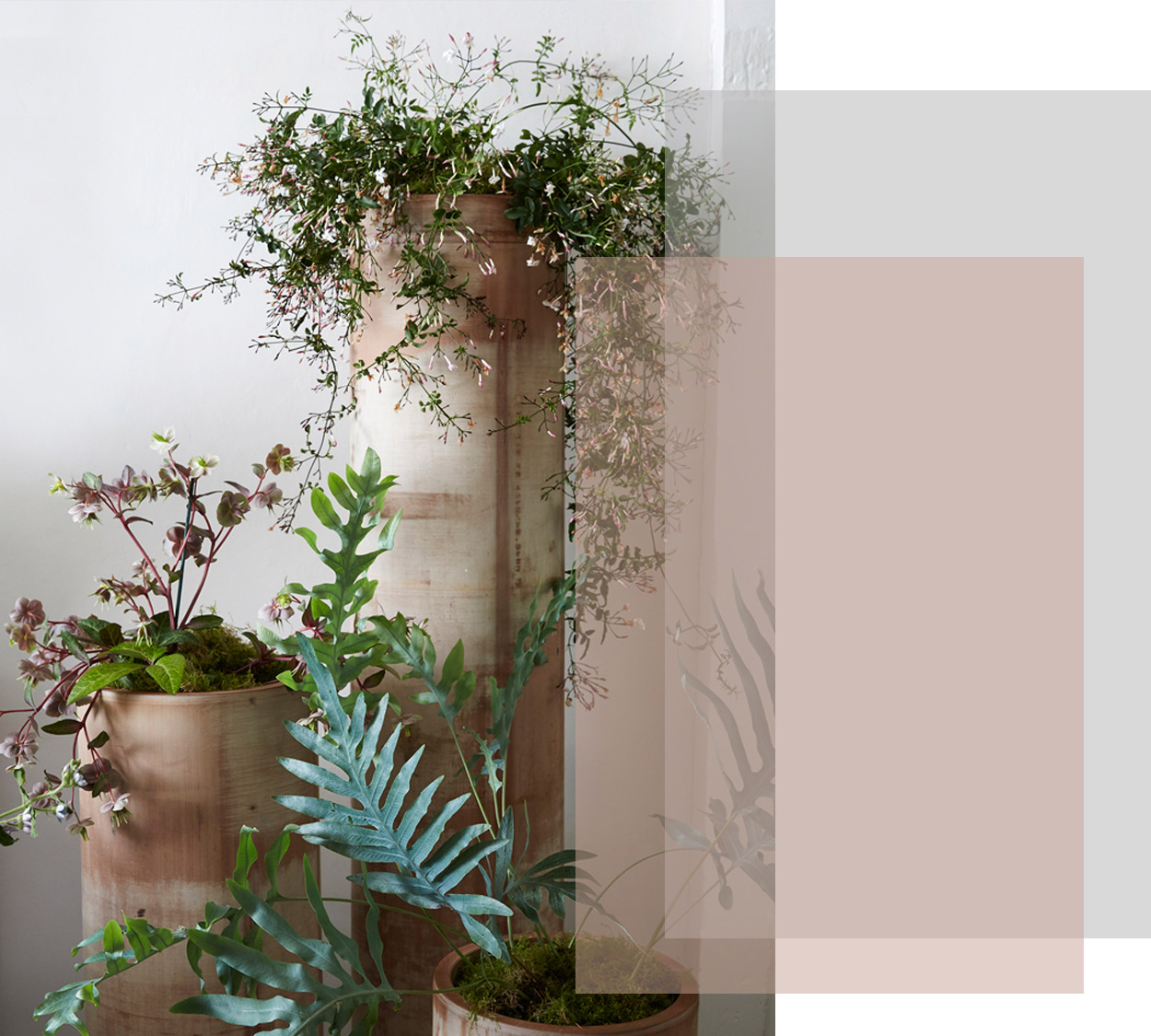 —Plants— - At Lunaria we love to use living plants, from indoor plants to 10 ft trees , I can discuss with you options for hiring them to add impact for the day or if purchased they can be gifted or planted in your garden—a living memory of your special day.