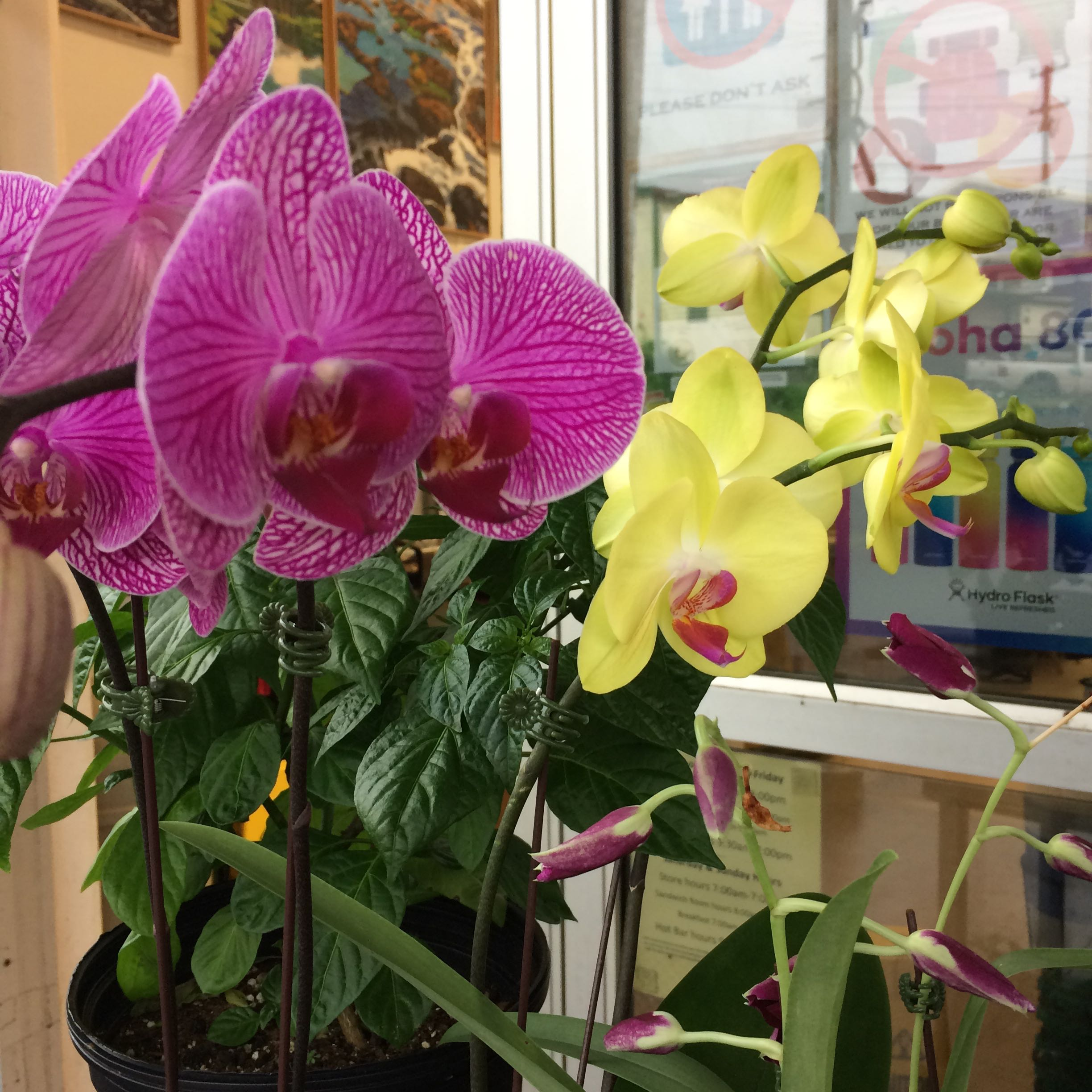 PurpleOrchids_1353.jpg