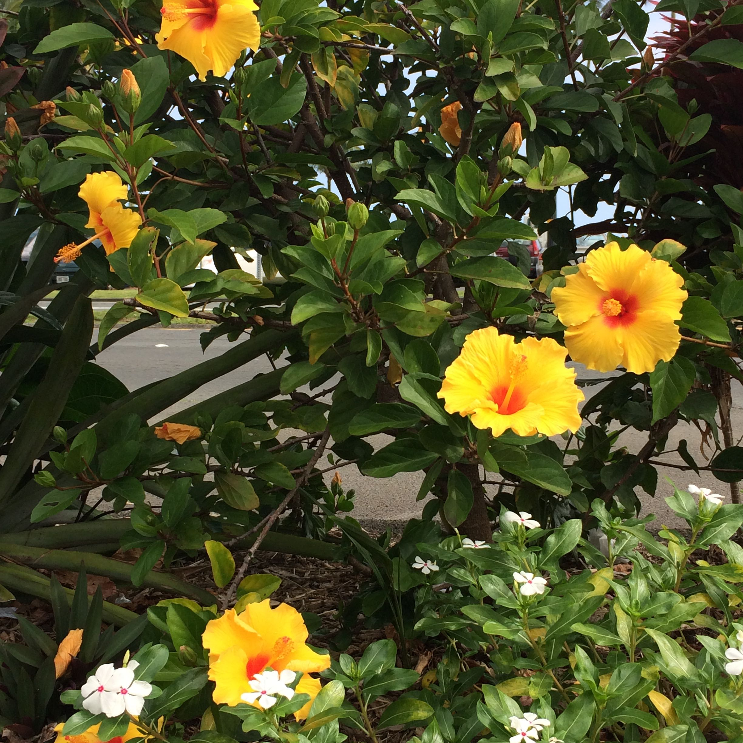 Yellow_Flowers_1056.jpg