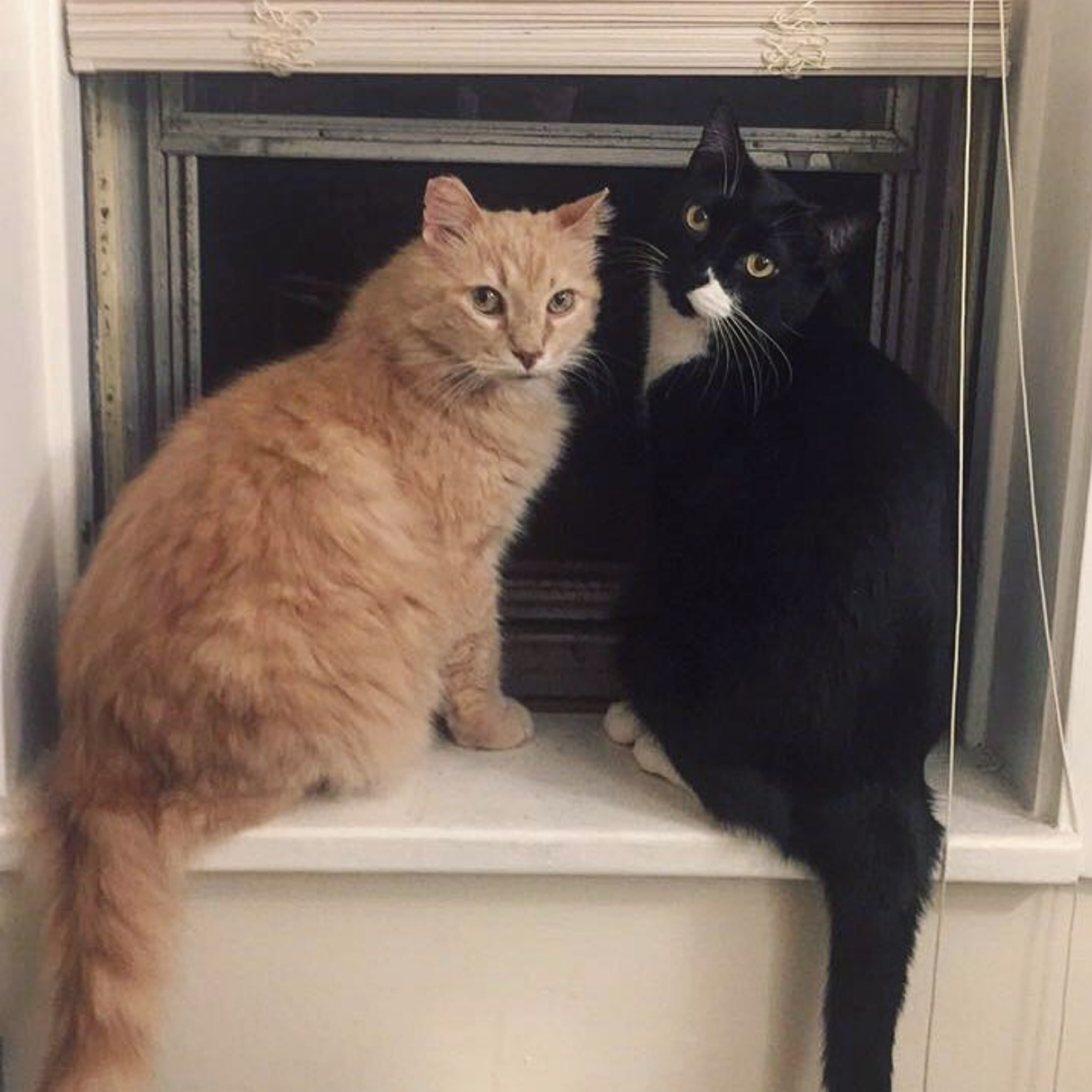 Crazy Cat Lady - Yes, yes I am. Meet Budders & Draven.