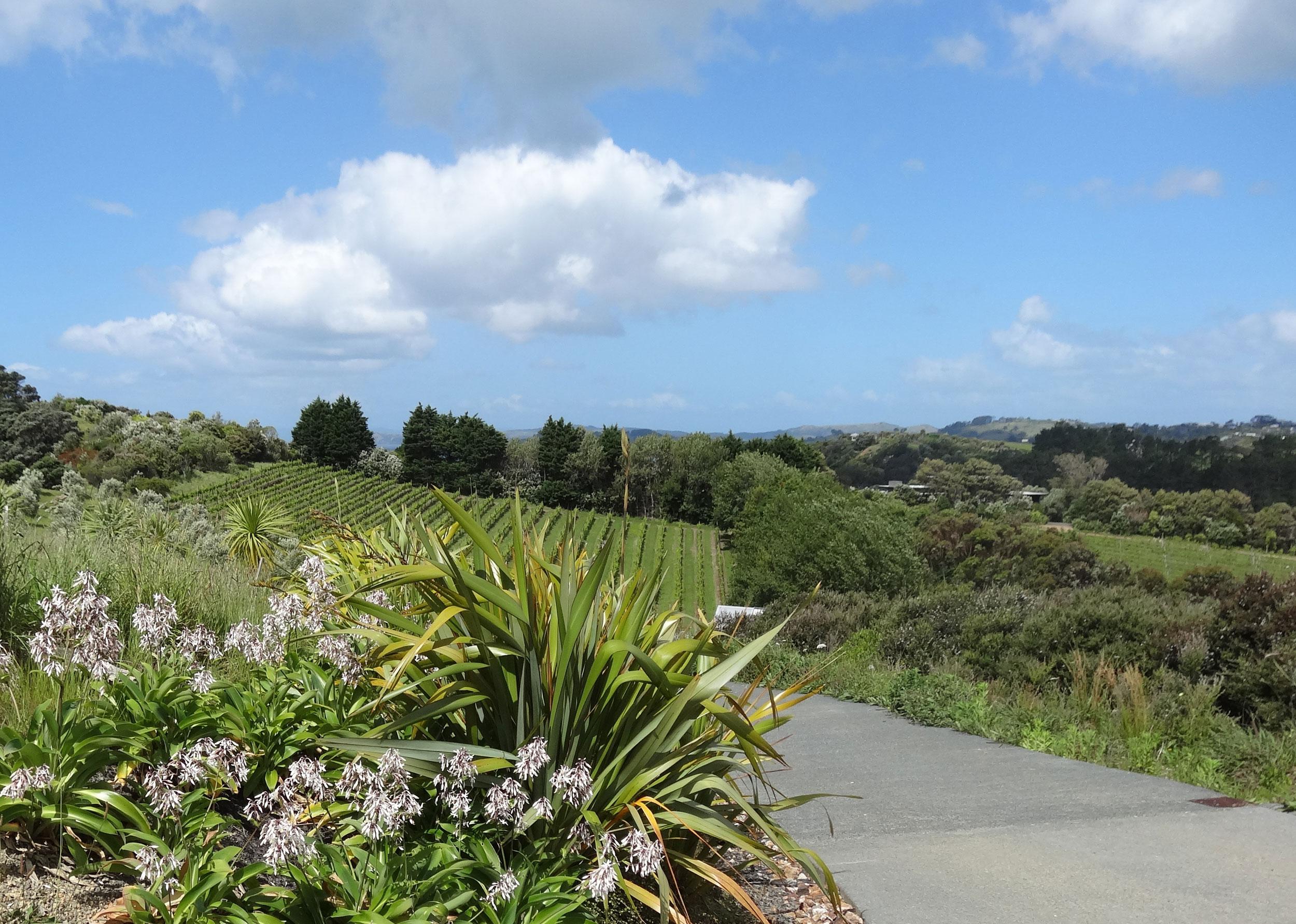 waiheke-island-residental-landscape-design-06.jpg