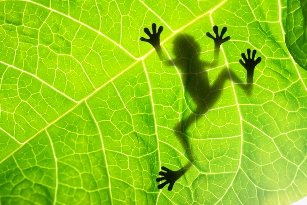 frog feet.jpg