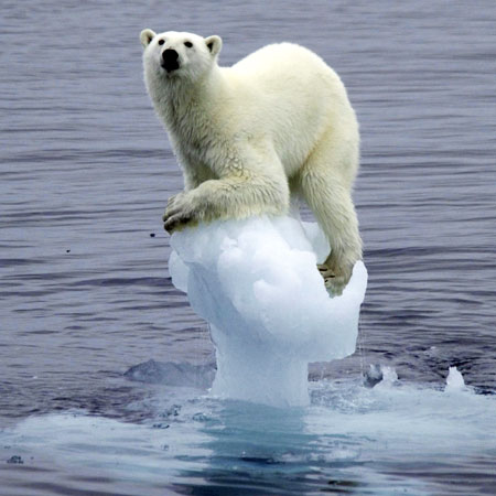 Why did the white bear dissolve in water? - Because it was polar.Explanation: Water is a 'polar' molecule, because it has a positive electrical charge and a negative electrical charge inside it. When this is the case, the molecule is called a 'polar molecule' meaning that it has electrical poles. (Otherwise it is called a 'non-polar molecule'.) Because of this, any other polar molecule can dissolve in water. Thus, the joke says a polar bear would dissolve in water!