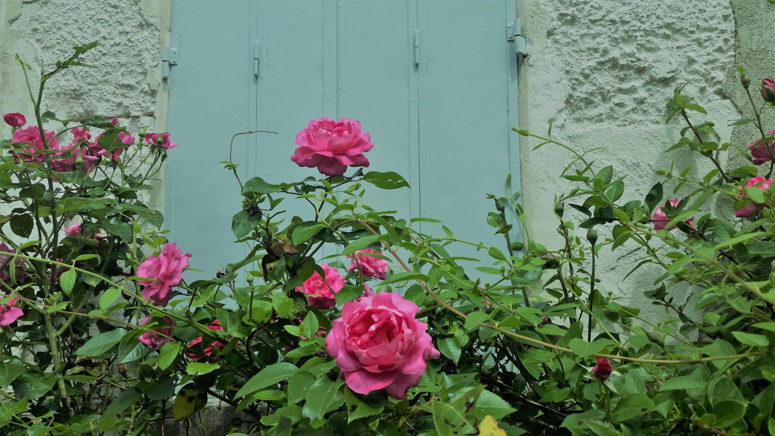darling buds of may.jpg