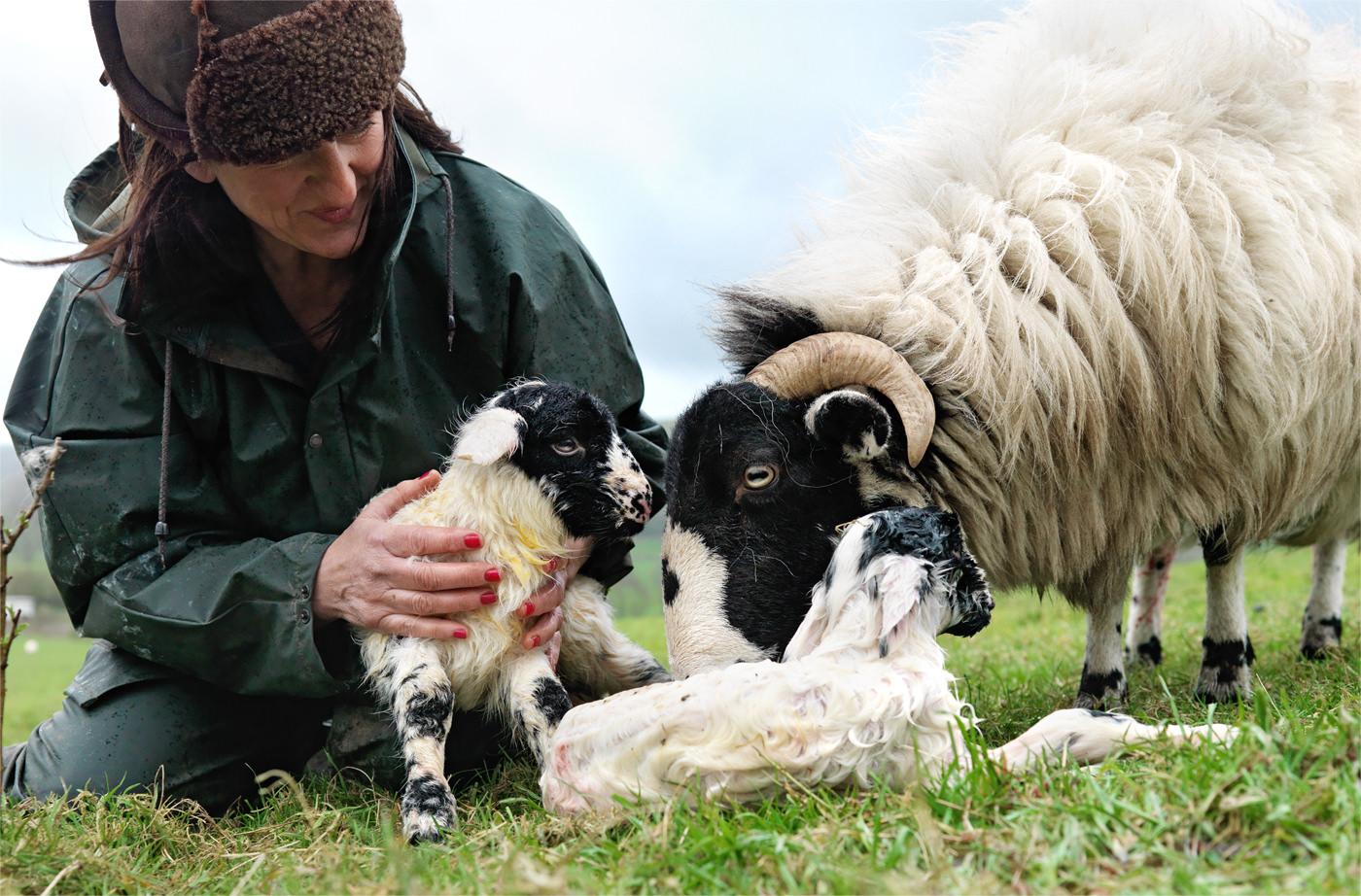 shepherdess_morning_chores.jpg