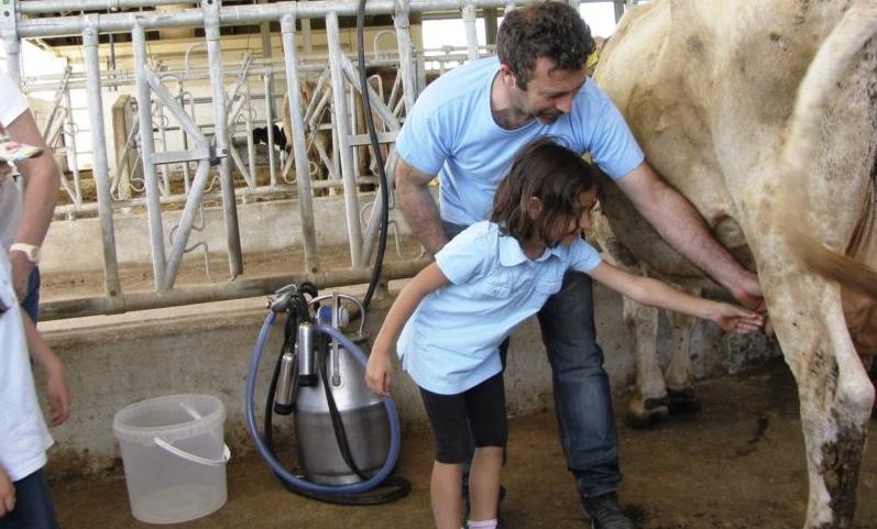 Kids Milking Cow.jpeg