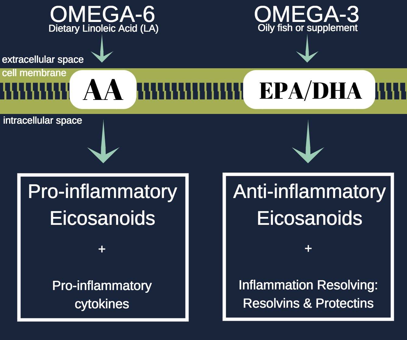 GENERALIZED OVERVIEW OF THE RELEASE OF OMEGA-3 AND OMEGA-6 FATTY ACIDS FROM CELL MEMBRANE PHOSPHOLIPIDS AND THEIR RESPECTIVE EICOSANOID DERIVATIVES