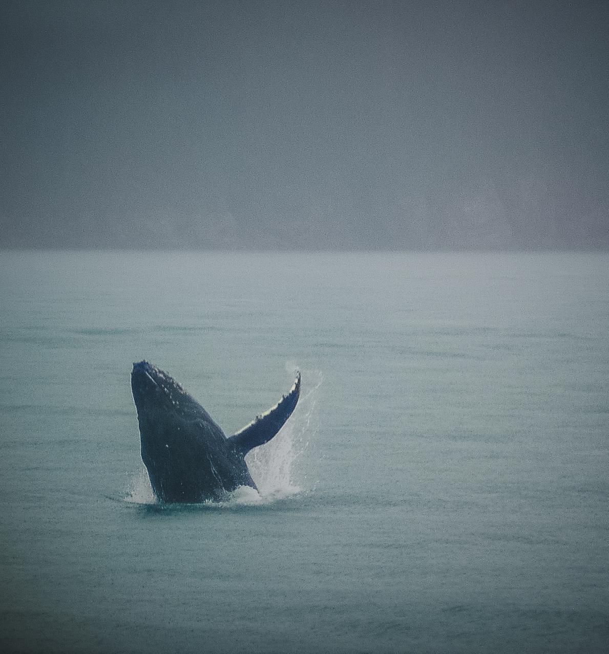 kenai_whale_crockett_2010.jpg
