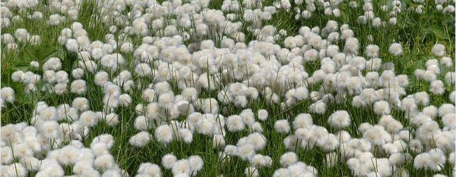 coton-culture.jpg