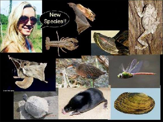 wildlife-report-intriguing-finds.jpg