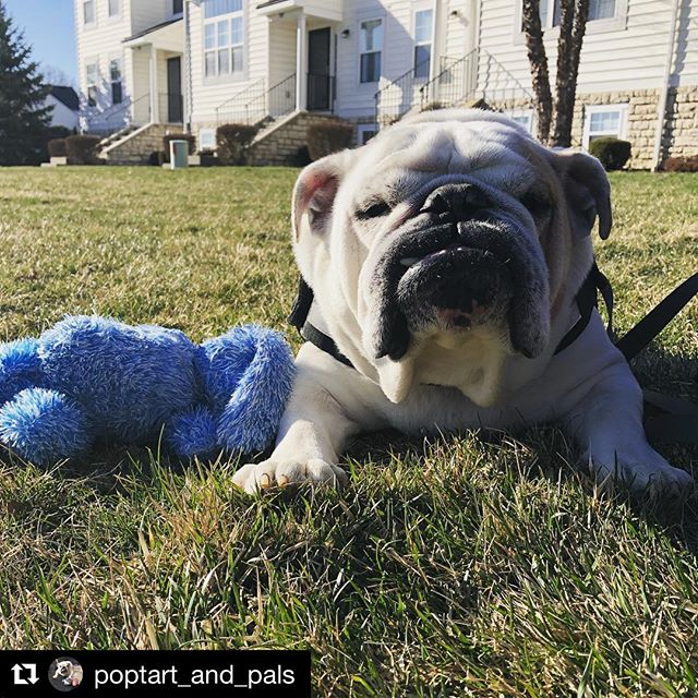 ☀� Enjoy that weekend sunshine ☀� #Repost @poptart_and_pals ・・・ Mom can't you see I'm sunbathing with my bunny? Please leave us alone 😎