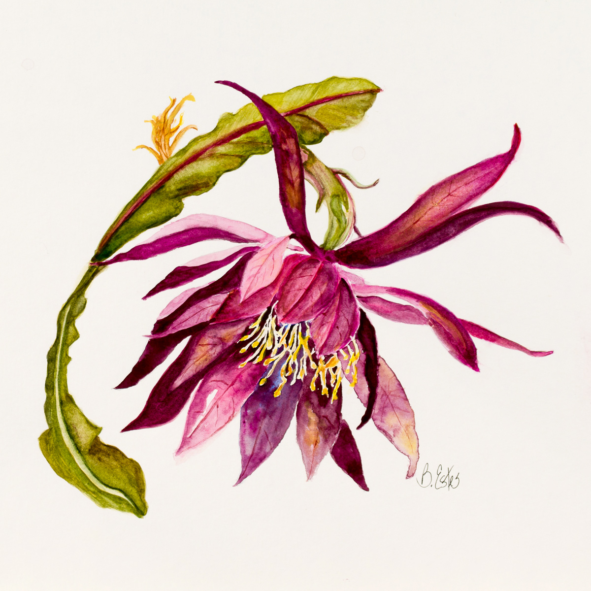 Botanical - Collection