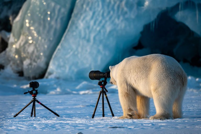 Roie-Galitz_Wildlife-PhotograBear_00001922-768x512.jpg.optimal.jpg