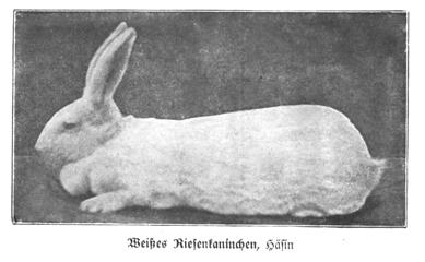 1905 postcardz.jpg