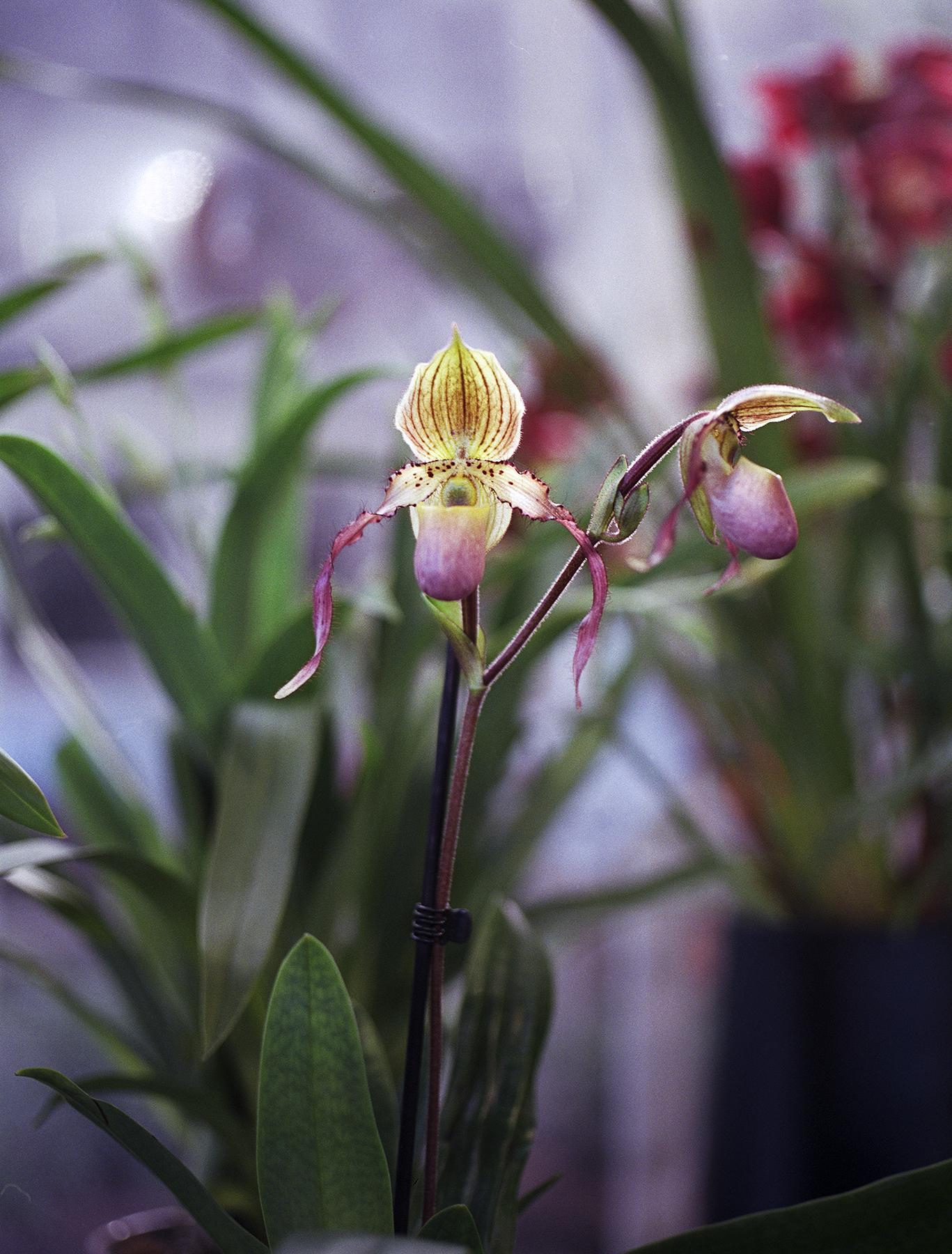 orchid2.jpg