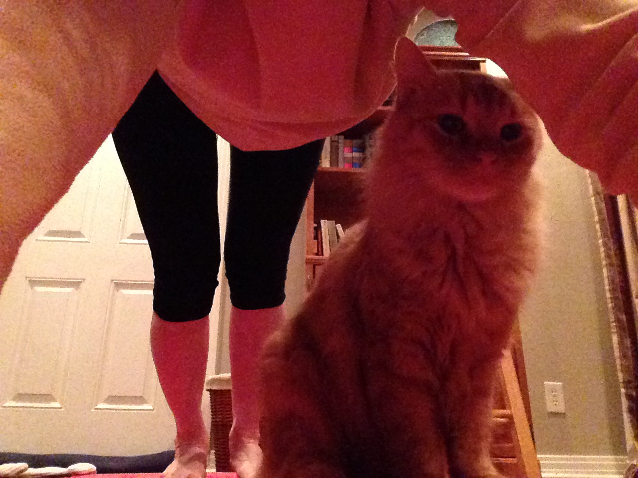 Sebastian the Cat is often a part of my home practice.