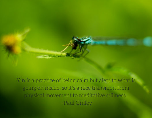 Paul Grilley has been instrumental in uniting Taoist Yoga with our modern knowledge of anatomy and physiology and Chinese meridians to develop a mind-body-spirit approach to Yin Yoga as we know it today.