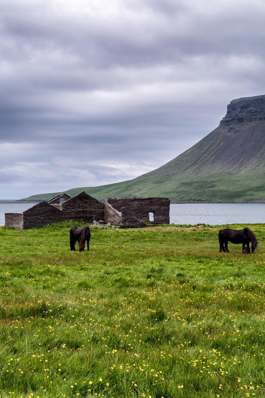Horses near Kirkjufell small.jpg
