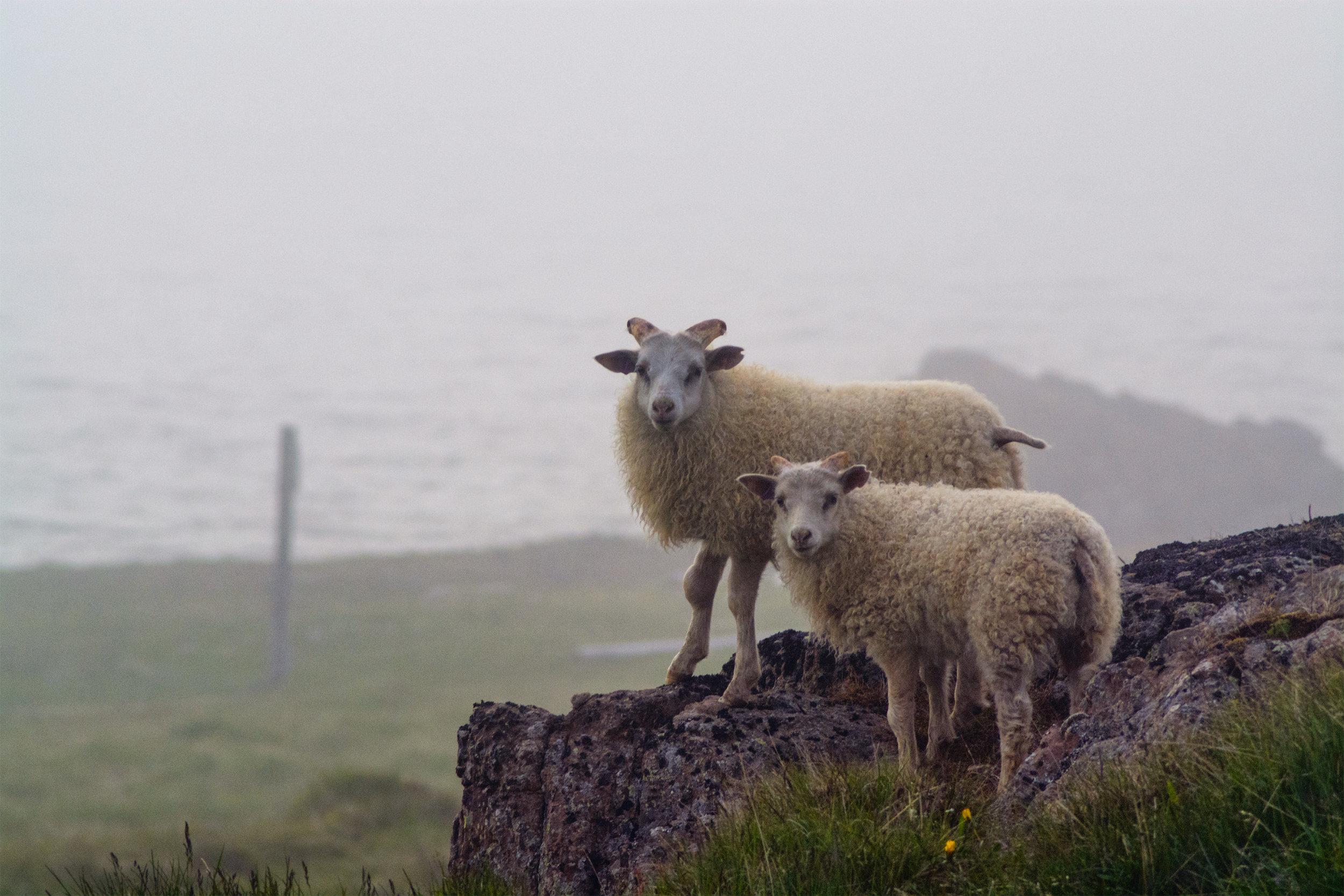 Sheepski small.jpg