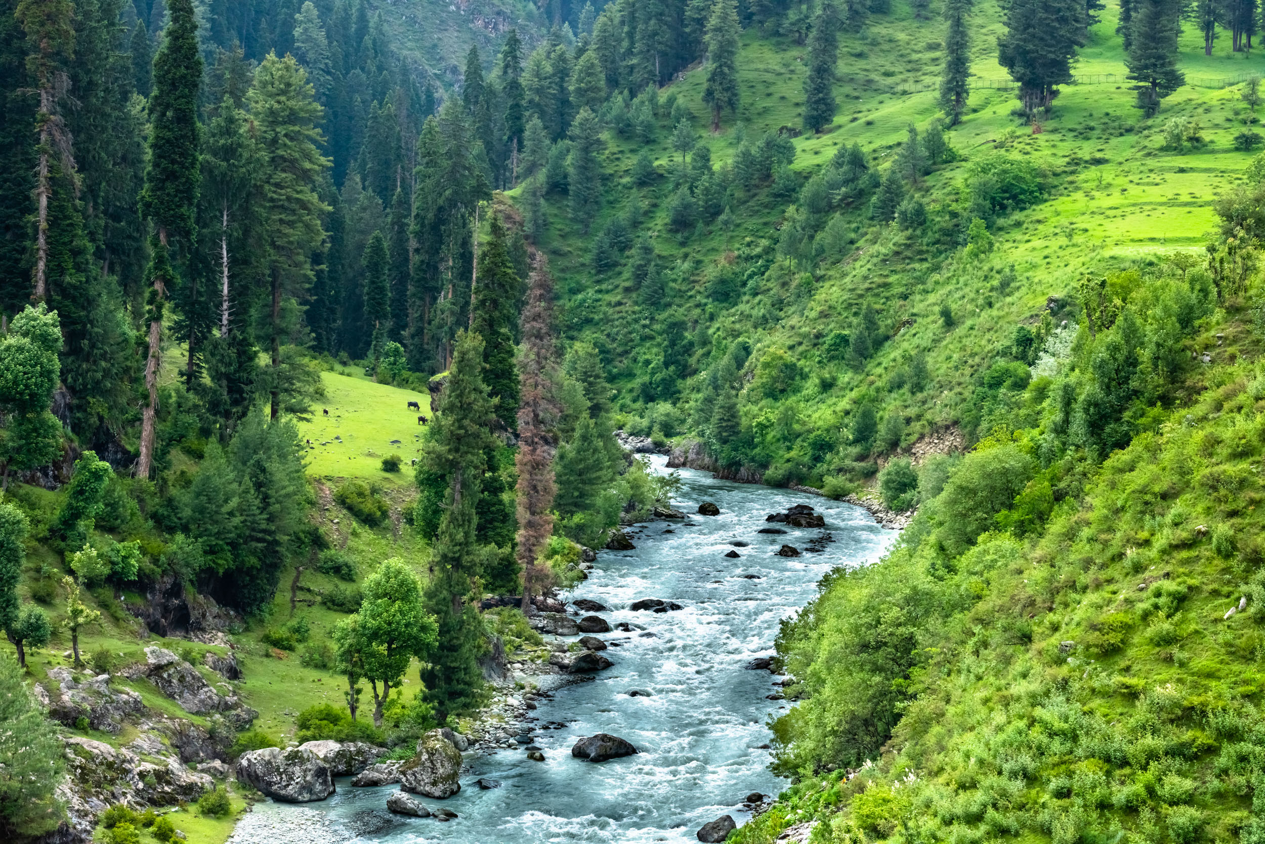 Streams and green meadows in Aru Valley