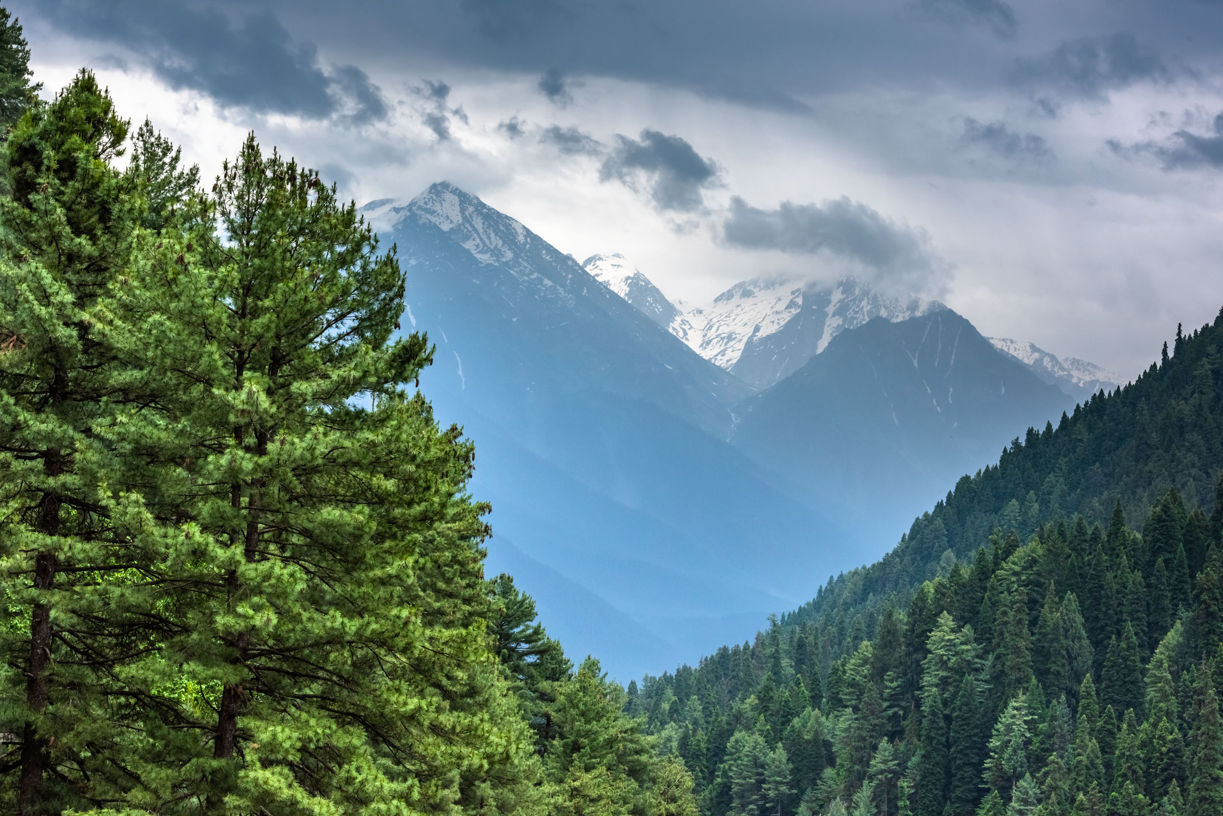 Beautiful Valley with Alpine Trees carpet