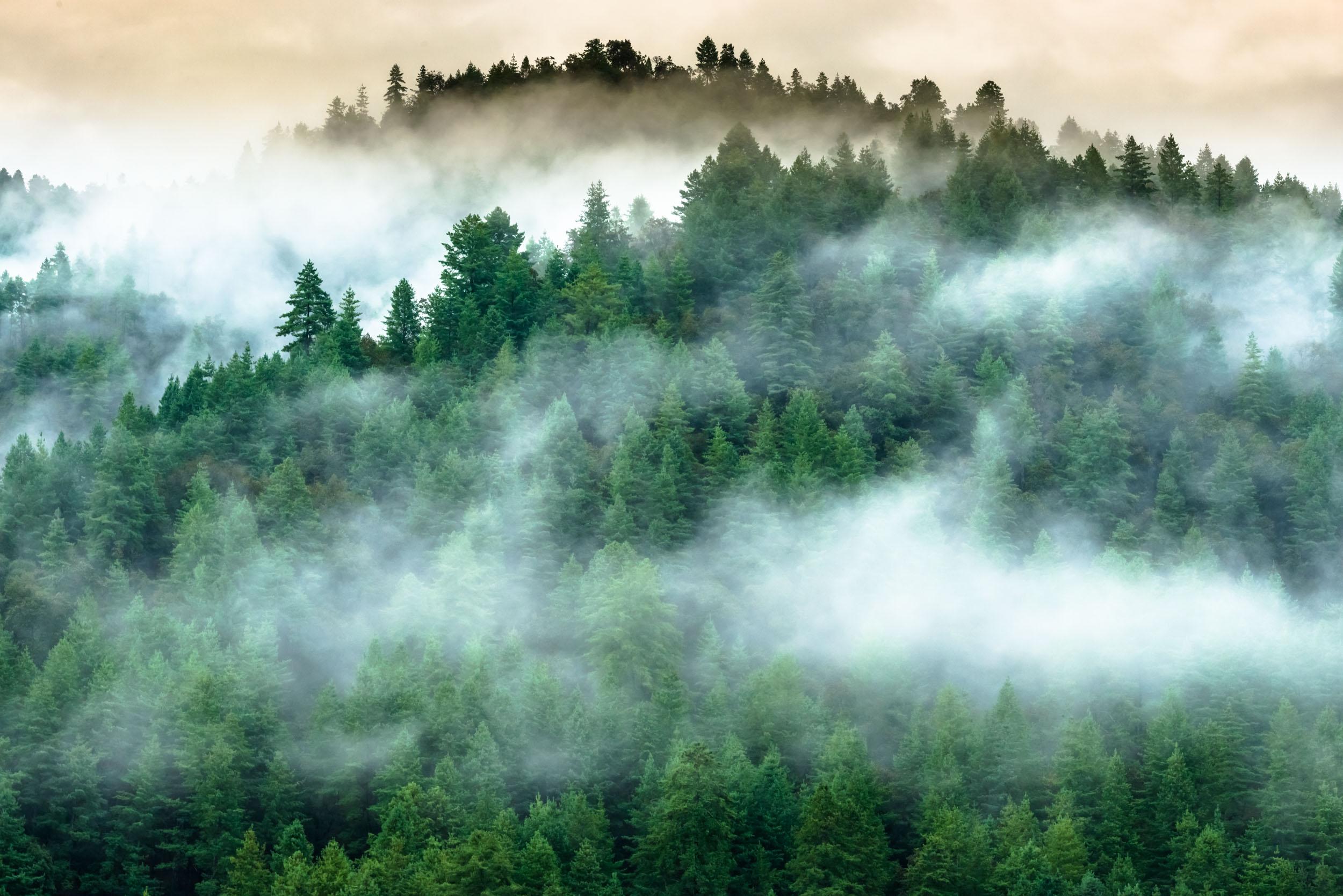 Mist carpet over Alpine Trees